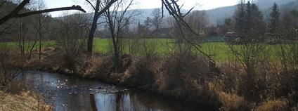 Řeka Opava na SZ okraji Nových Heřminov Foto: MartinVeselka Wikimedia Commons