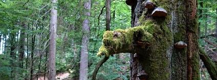Foto: Jeňýk Hofmeister / Katedra ekologie lesa