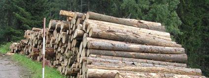 Skládka dřeva poblíž Svojše v II. zásahové zóně národního parku.