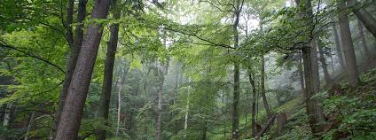 foto: Ondrej Kameniar / Katedra ekologie lesa