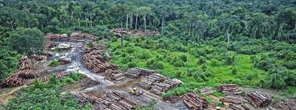 Odlesňování Foto: Felipe Werneck/Ibama Flickr