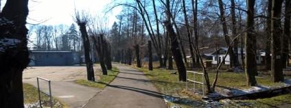 Česká inspekce životního prostředí pokutovala obec Osoblaha za nepovedený ořez stromů