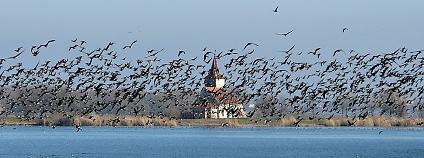 Foto: Jiří Šafránek / Moravský ornitologický spolek