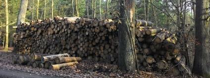 Skládka dřeva v lese Foto: Zdeňka Kováříková Ekolist.cz