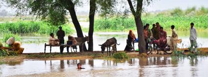 foto:  Asianet-Pakistan / Shutterstock.com