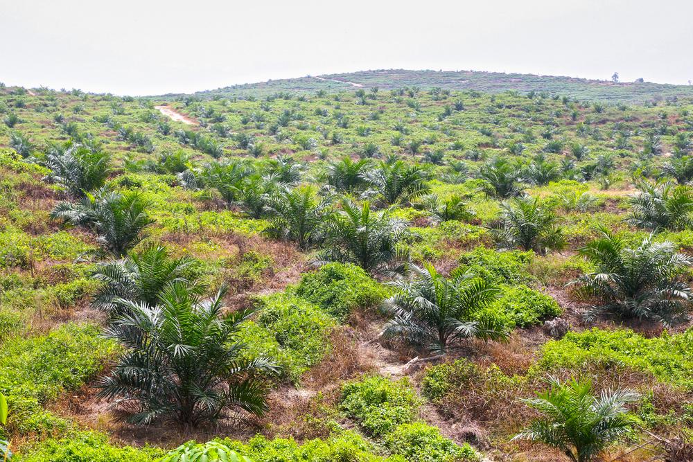 EU má v plánu omezit svůj vliv na odlesňování tropických deštných lesů. Ze 1141 návrhů mají smysl jen dva