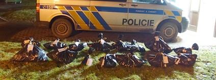 Celkový počet mrtvých zvířat nalezených u Sedlice na Příbramsku je 16. Případ si převzala kriminální policie. Foto: Klára Hlubocká Česká společnost ornitologická