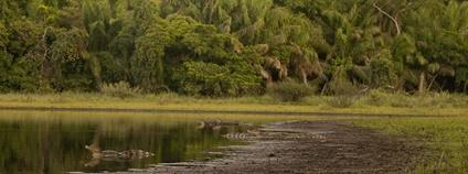 Brazilský mokřad Pantanal Foto: wanderlasss Flickr.com