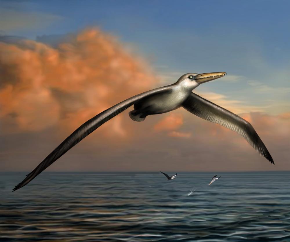 Obrovské ptáky