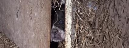 Pes v množírně Foto:OBRAZ