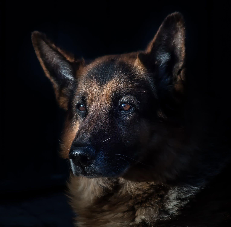U Břeclavi soutěžili nejlepší čeští záchranářští psi a psovodi