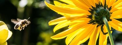 Včela Foto: Pexels
