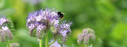 Včela na rostlině Foto: Juraj Berta Pixabay