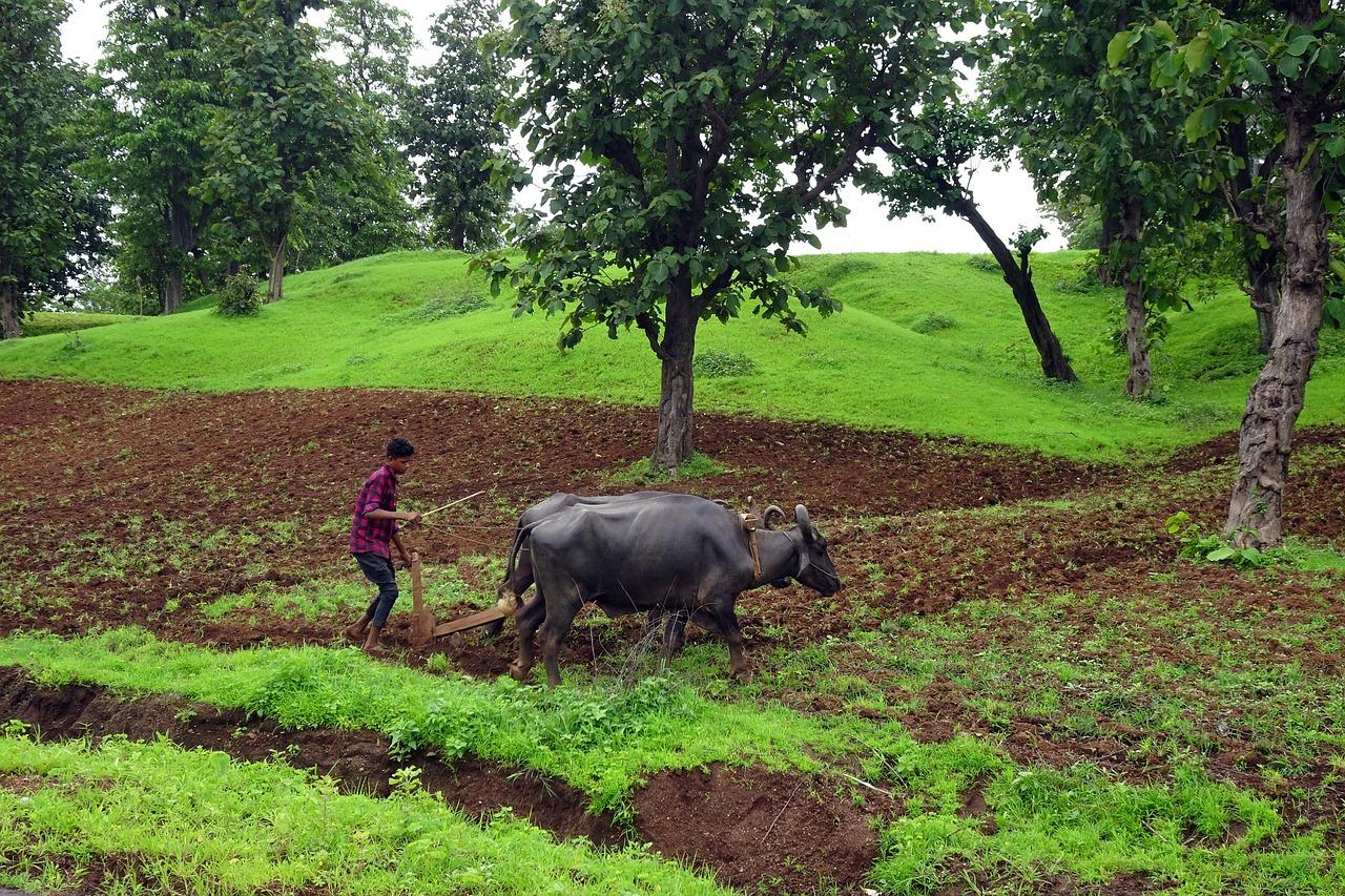 Farmáři v Indii bojují proti zemědělské reformě blokádou silnic