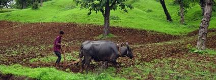 Zemědělec v Indii Foto: sarangib pixabay.com