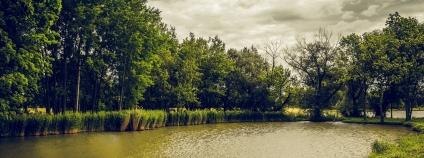 Rybník se stromy Foto: KostkaCZ Pixabay