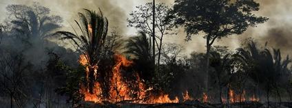 Požár lesa Foto: norsez Oh Flickr