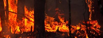 Požár lesa Foto: Tatiana Bulyonkova Flickr