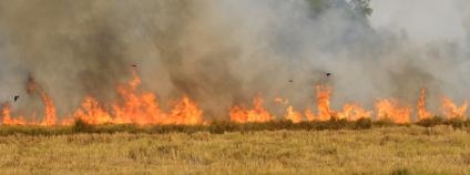 Oheň na poli Foto: montree hanlue Shutterstock.com