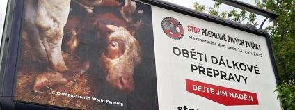 Foto: Compassion in World Farming