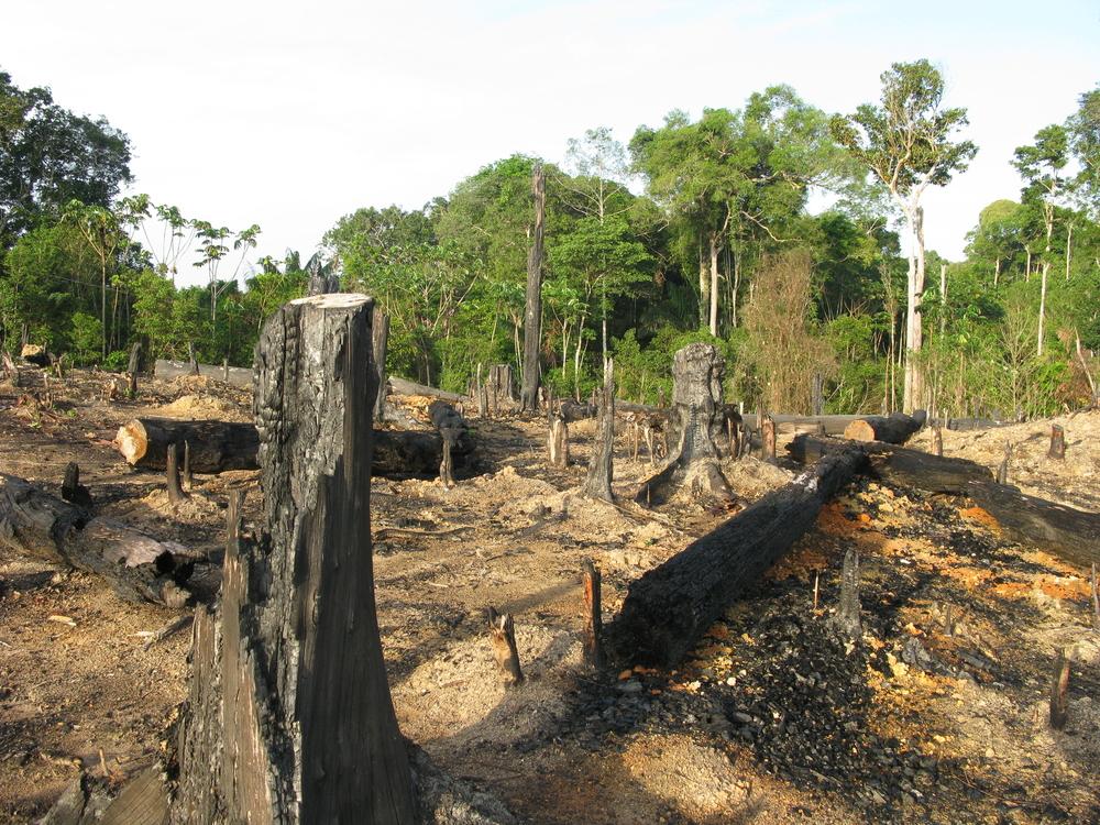 Brazilský ministr rezignoval po obvinění z nelegálního vývozu dřeva z Amazonie