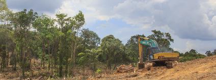 Odlesňování v JV Asii Foto: Rich Carey Shutterstock