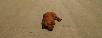 Opuštěný pes v kubánském městě Foto: hl_1001 Flickr.com