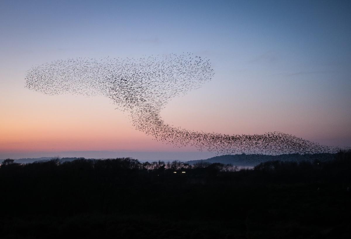 vidět velké ptáky