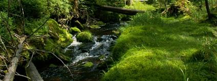 Pta�� potok na Modrav�, �umava Foto: �UMAVAPRO