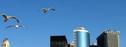 Ptáci na Manhattanu