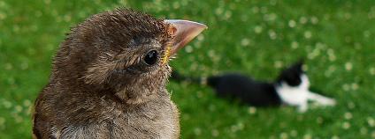 Pták a kočka Foto: Eddy Van 3000 Flickr.com