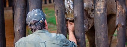 Foto: Ben Gasore / Safari Park Dvůr Králové
