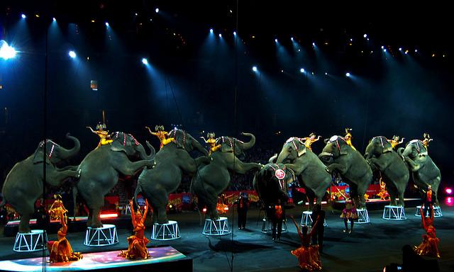 f3e12d01589 Kampaň Cirkusy bez zvířat byla organizací Svoboda zvířat zahájena v r.  2003. Ilustarční snímek