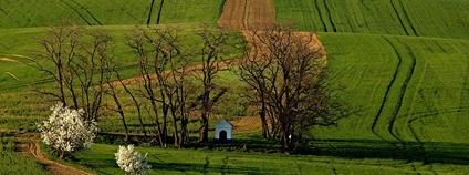 Drobná sakrální památka v krajině, kaple sv. Barbory východně od Strážovic na Kyjovsku Foto: Roman Kuřimský Wikimedia Commons
