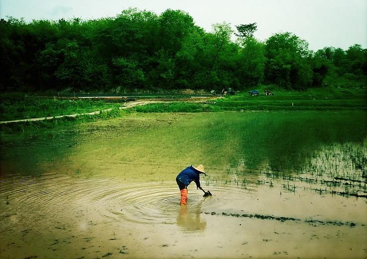 V KLDR po záplavách panují obavy ze špatné sklizně