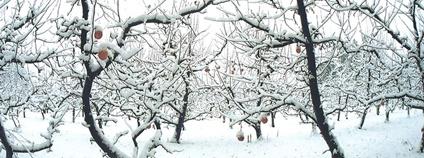 Sad v zimě Foto: Jeremy Hiebert Flickr