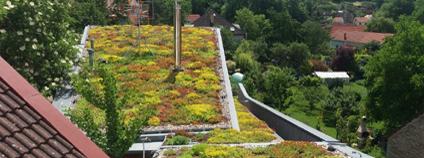 Zelená střecha Foto: Nadace Partnerství