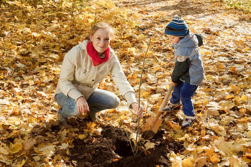 Za každé narozené dítě by měl v Litomyšli přibýt jeden strom