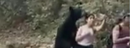 Selfie s medvědem Foto: Sky News