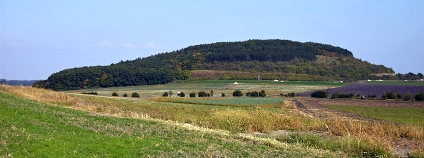 Foto: Slimejs / Wikimedia Commons