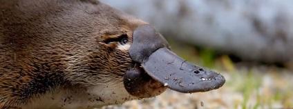 foto: List of Animals / youtube.com