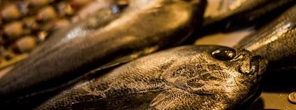 Mrtvé ryby Foto: Piqsels