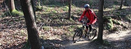 Na singltreku se člověk veze po úzké, ovšem pevné stezce, takže si může pohodlně užívat všechny zákruty mezi stromy nebo se houpat na terénních vlnách. Foto: Jan Stejskal / Ekolist.cz