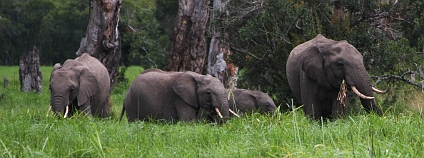 Sloni v soukromé keňské rezervaci Ol Pejeta. Foto: Jan Stejskal Ekolist.cz