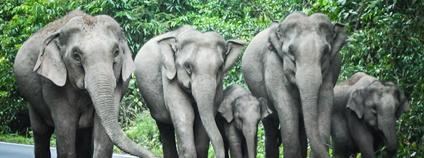 Sloni Foto: Jono Hey Flickr