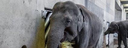 foto: Zoo Praha