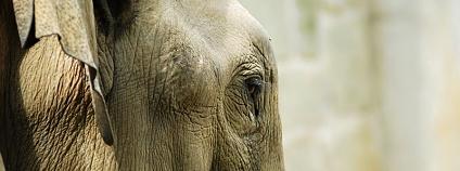foto: Zoo Ostrava