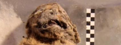Nález lvíčete jeskyního lva Foto: MDPI