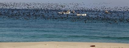 Somálské pobřeží Foto: Heimo Liendl Flickr