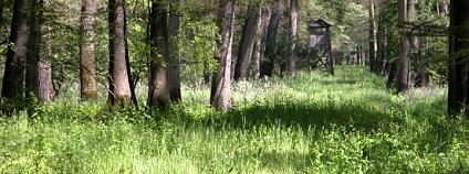 lužní lesy Foto: Lesy ČR